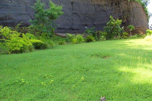 Plant, Grass, Rock, Grenada, Caribbean, Gardening