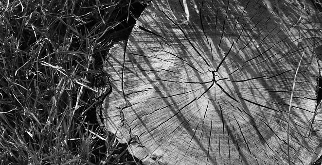 Stump, Nature, Forest, Grass, Beauty, Life, Admiration