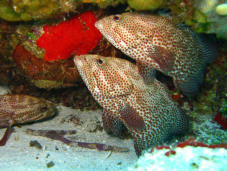 Fish, Underwater, Marine, Ocean, Coral, Nature, Reef