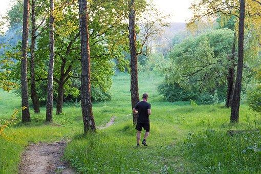 Running, Runner, Charging, Morning, Evening, Forest
