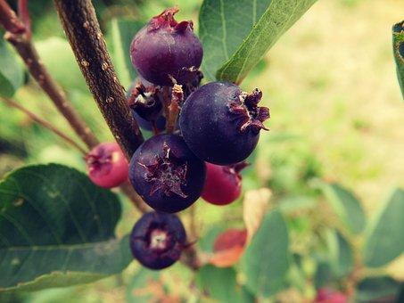 Blueberries, Green, Nature, Plant, Grass, Macro