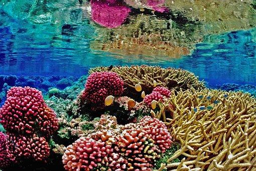 Recife, Coral Reef, Mar, Marine, Ocean, Anemona, Beach