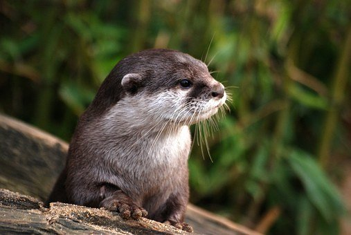 Head, Details, Otter, Close-up, Whiskers, Cute, Fur