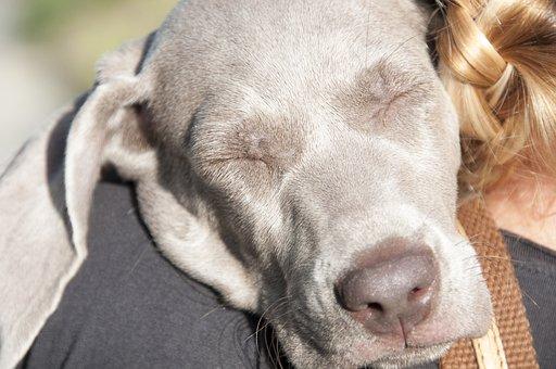 Animals, Dog, A Friend Of Man, Pet, Animal, Breed
