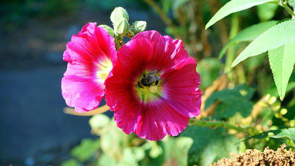 Flower, Pink, Pink Flowers, Nature, Petal, Spring