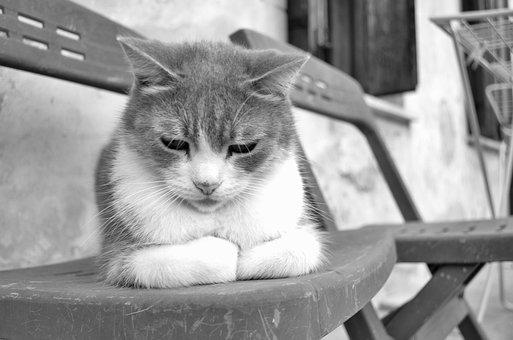 Cat, Feline, Animals, Portrait Of Cat, Animal, Felines