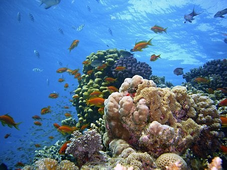 Underwater, Reef, Diving, Underwater World, Coral