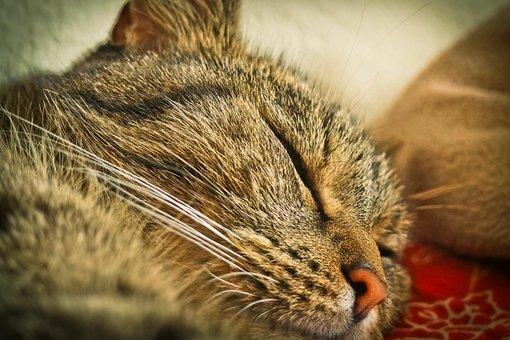 Cat, Animal, Pet, Mieze, Nature, Portrait, Sleep, Sweet