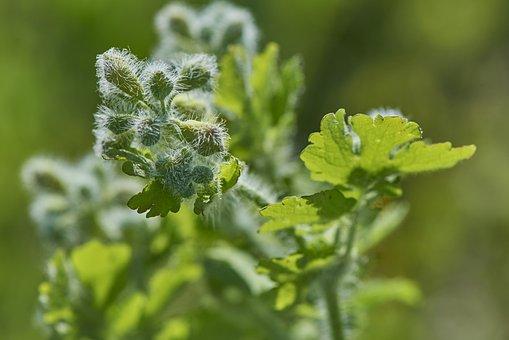 Green, Flower, The Puck, Bud, Spring, Macro