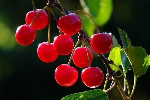Cherries, Cherry, Branch, Fruit, Red, Fruits, Tree