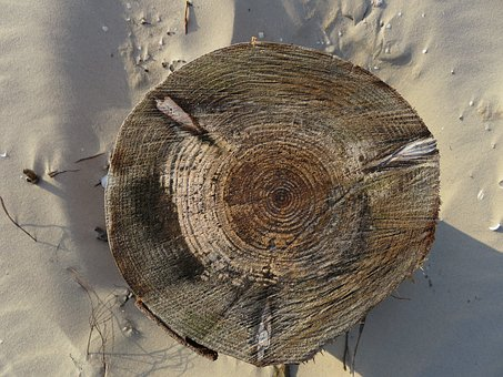Annual Rings, Tree, Sand, Tribe, Structure, Sawed Off