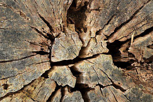 Tree, Tree Stump, Nature, Wood, Sawed Off, Forest, Log