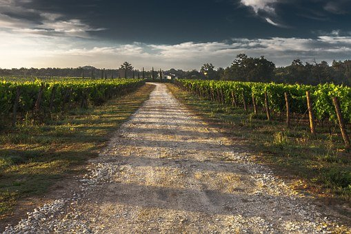 Country Lane, Gravel Road, Tuscany, Way, Path, Grape