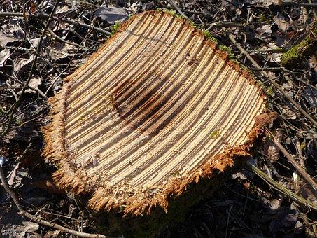 Tree Stump, Wood, Sägestruktur, Sawed Off, Tree, Log