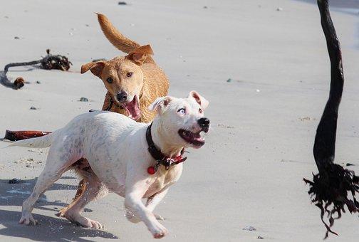 Dogs, Beach, Batons, Play, Movement, Animal