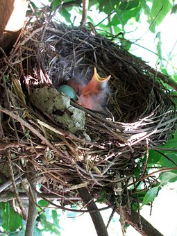 Bird's Nest, Nesting Place, Bird Breeding, Bird