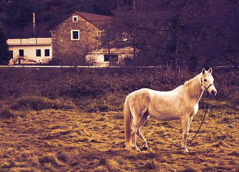 Horse, Stopped, Houses, Earth