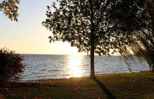 Morgenstimmung, Autumn, Frühherbst, Trees, Shrubs
