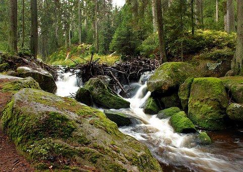 šumava, River, Water, Moss, Stones, South Bohemia