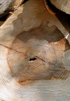 Log, Wood, Timber, Lumber, Tree, Wooden, Industry