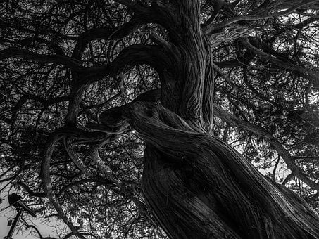 Tree, Black And White, Kahl, Nature