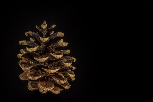 Pine Cones, Cut Out, Fir, Blossom, Bloom