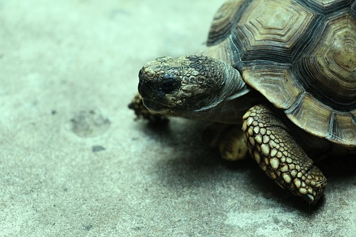 Turtle, Cold, Shell, Reptile, Cold Blood
