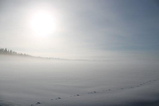Winter, Snow, Field, Sun, Sunlight, Hare's Trace, Trace
