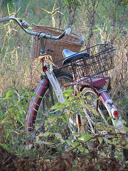 Bicycle, Autumn, Plants, Basket, Finnish, Evening, Bike