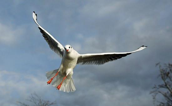 Birds, Flying, Seagull, Sky, Plumage, Freedom