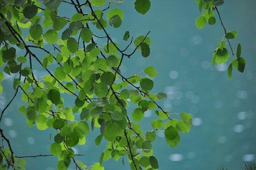 Foliage, Summer, Green, Emerald, Plant, Nature, Tree