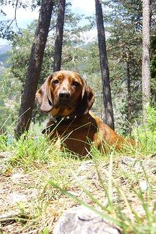 Far Right, Tyrol, Hunting Dog, Lake