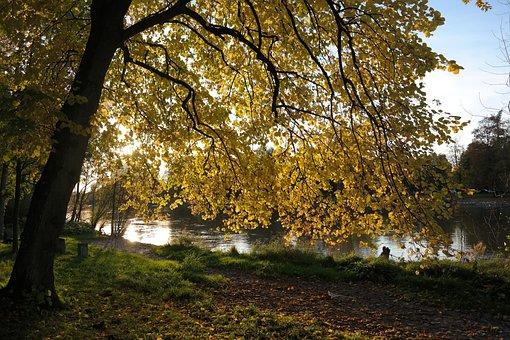 Linde, Tree, Autumn, Idyll, Danube, River, Water