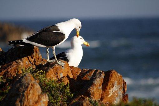 South Africa, Kynsna Heads, Seascape, Rocks, Sea, Water