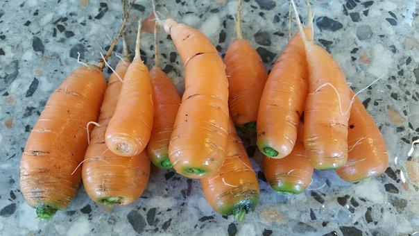 Carrot, Carrots, Tuber