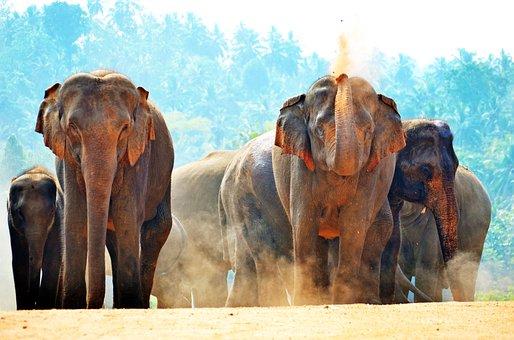 Elephants, Sun Bath, Playing With Sand, Dusty, Dust