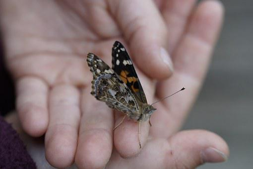 Butterfly, Painted Lady, Close, Edelfalter, Insect