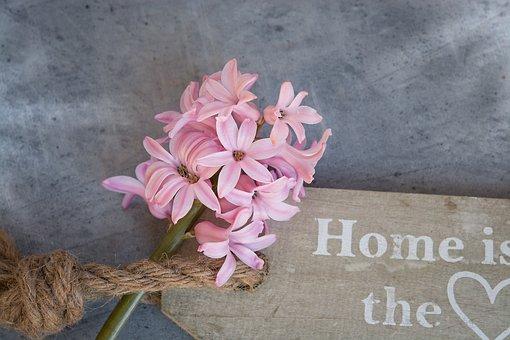 Hyacinth, Flower, Pink, Pink Flower, Spring Flower