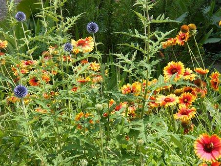 Summer Flowers, Meadow, Flower Meadow, Summer, Flowers