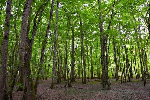 Forest, Background, Green, Structure, Trees, Moss