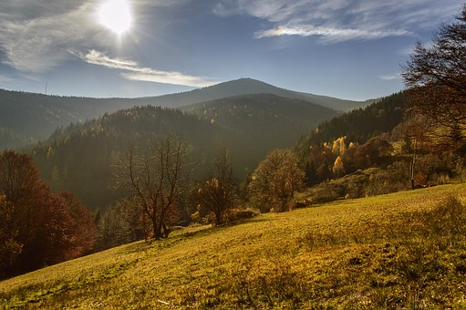 Autumn, Forest, Tree, Light, Sun, Path, Walk, Sunlight