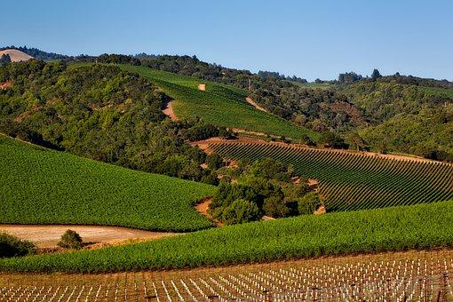 Vineyard, California, Napa Valley, Sonoma, Crop