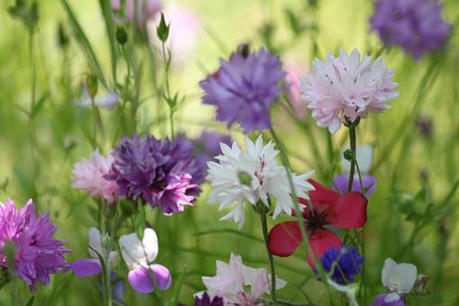 Flower Meadow, Summer Flowers, Flowers, Nature, Meadow