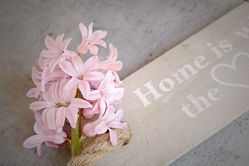 Hyacinth, Pink, Flowers, Pink Flowers, Pink Flower