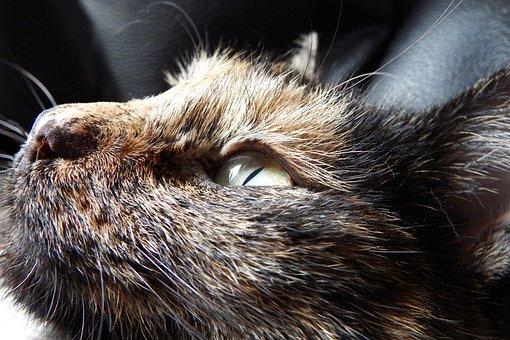 Cat, Animal, Relax, Tortoise Shell, Tricolor