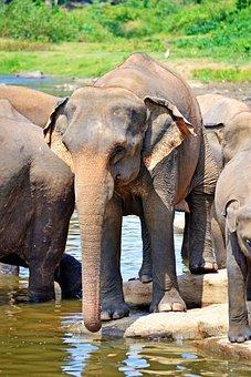 Elephants, Bath, Sun Bath, River Bath, River