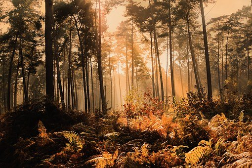 Forest, Fog, Sunlight, Autumn, Autumn Mood, Nature