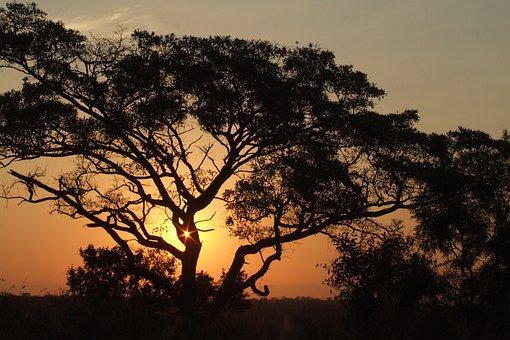 Africa, Sunset, Nature, Sky, Sun, Silhouette, Warm
