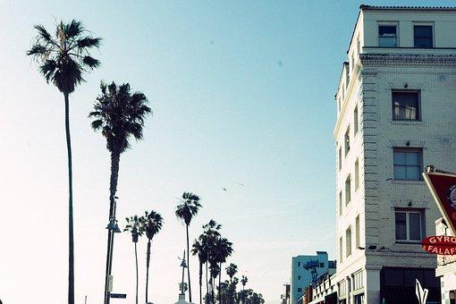 Palm Trees, Sunshine, Sunny, Summer, Blue, Sky