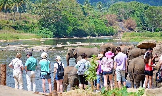 Tourists, Tourist Attraction, Elephants, Bath, Sun Bath